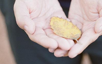 hand holding fall leaf